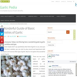 A Wonderful Guide of Basic Varieties of Garlic - Garlic Pedia