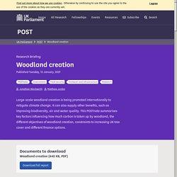 Mélodie - Woodland creation - POST