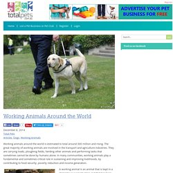 Working Animals Around the World - Total Pets