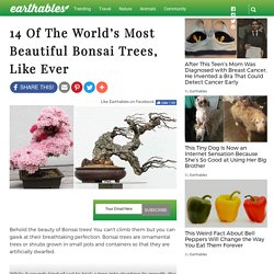 14 Of The World's Most Beautiful Bonsai Trees, Like Ever