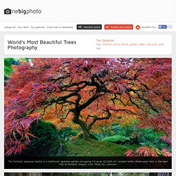 World's Most Beautiful Trees Photography