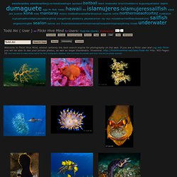 Todd Aki Underwater Marvels