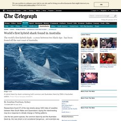 World's first hybrid shark found off Australia