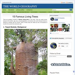 15 Famous Living Trees