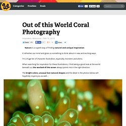 storage - Out of this World Coral Photography