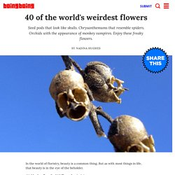 40 of the world's weirdest flowers