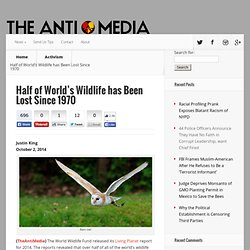 Half of World's Wildlife has Been Lost Since 1970 - The Anti-Media
