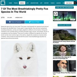 7 Of The Most Breathtakingly Pretty Fox Species In The WorldOnemorepost