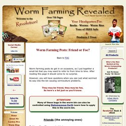 Worm Farming Pests