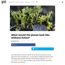 What would the planet look like without lichen?