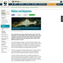 Habitat and Adaptation