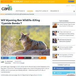 Will Wyoming Ban Wildlife-Killing 'Cyanide Bombs'?