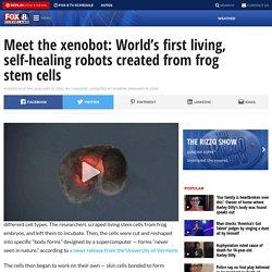 Meet the xenobot: World's first living, self-healing robots created from frog stem cells