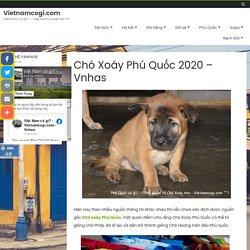 Chó Xoáy Phú Quốc 2020 - Vnhas - Vietnamcogi.com