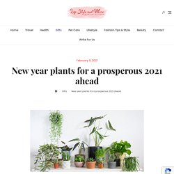 New year plants for a prosperous 2021 ahead