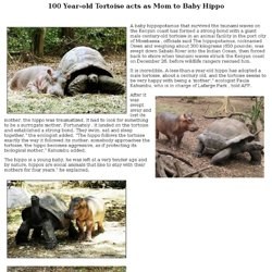 100 Year-old Tortoise acts as Mom to Baby Hippo