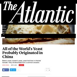 Yeast Came From China