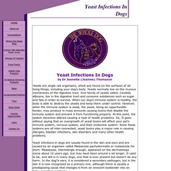 Yeast Infections In Dogs