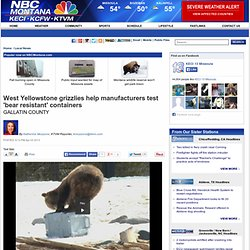 West Yellowstone grizzlies help manufacturers test 'bear resistant' containers | Local News - Home