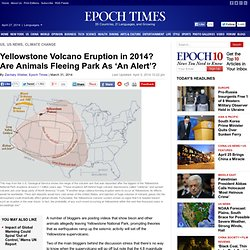 Yellowstone Volcano Eruption in 2014? Are Animals Fleeing Park As 'An Alert'?