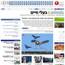 ynet אם אחת, שני אבות: צפו בעיטם הנדיר בישראל - ירוק