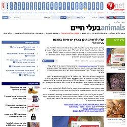 ynet עלה לרשת: היכן בארץ יש חיות בסכנת הכחדה? - ירוק