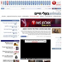 ynet אמא ואבא מחכים: המזל של החיוויאי הפצוע - ירוק