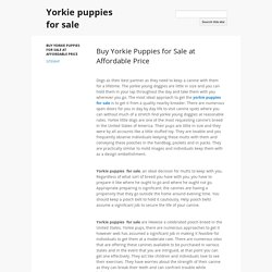 Buy Yorkie Puppies for Sale at Affordable Price