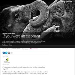 If you were an elephant …