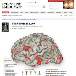 Your Brain in Love: Scientific American