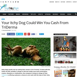 Your Itchy Dog Could Win You Cash From TriDerma