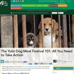 The Yulin Dog Meat Festival 101: All You Need to Take Action