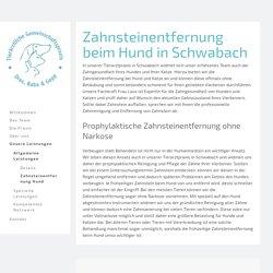 Zahnsteinentfernung Hund in Schwabach - Tierarztpraxis Dres. Baba & Gepp