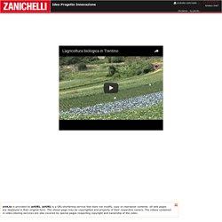 Zanichelli - Idea Progetto Innovazione