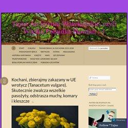 Kochani, zbierajmy zakazany w UE wrotycz (Tanacetum vulgare). Skutecznie zwalcza wszelkie pasożyty, odstrasza muchy, komary i kleszcze « Tajne Archiwum Watykańskie, czyli Wielka Pobudka Słowian :-)