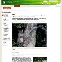 Rats: New Zealand animal pests and threats