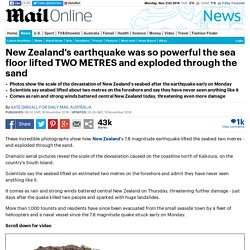New Zealand earthquake lifts the seabed by more than a METRE