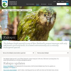 Kākāpō: New Zealand native land birds - kakapo