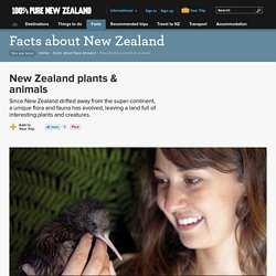 New Zealand plants & animals