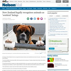 New Zealand legally recognises animals as 'sentient' beings