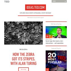 How the zebra got its stripes, with Alan Turing