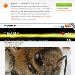 ZEMBLA: moord op de honingbij