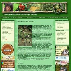 Origines et mécanismes de la déforestation