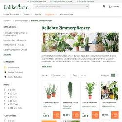 Zimmerpflanzen online kaufen? Bakker.com beliebte Zimmerpflanzen