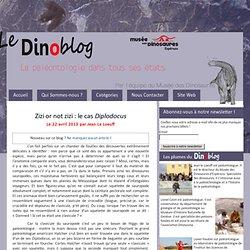 Zizi or not zizi : le cas Diplodocus