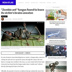 """""""Zombie ant"""" fungus found to leave its victim's brains uneaten"""