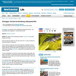Zoologger: Ancient air-breathing, triple-jawed fish - life - 29 September 2010