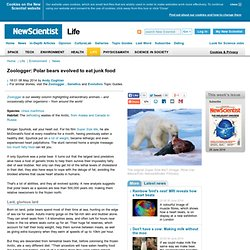 Zoologger: Polar bears evolved to eat junk food - life - 08 May 2014