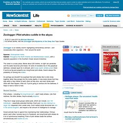 Zoologger: Pilot whales cuddle in the abyss - life - 21 June 2013
