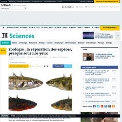 Zoologie: la séparation des espèces, presque sous nos yeux